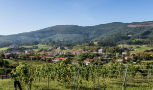 Bodega-Doniene-Gorrondona