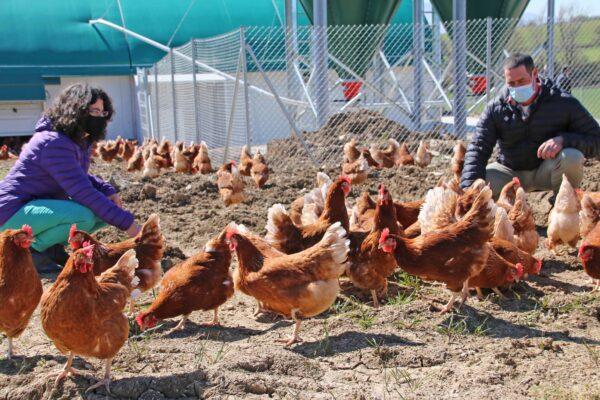 Huevos ecológicos Zalduondo